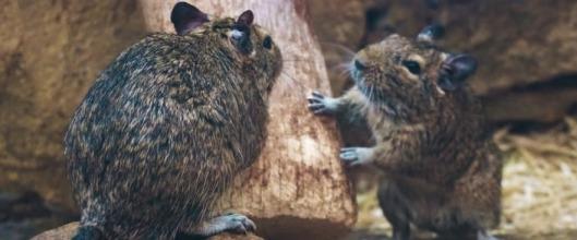 Myši a dřevo